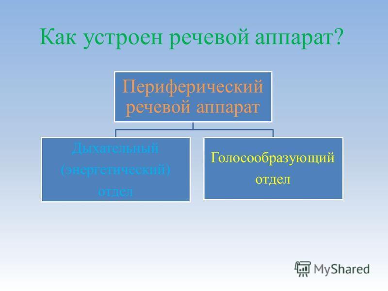 Периферический речевой аппарат Дыхательный (энергетический) отдел Голосообразующий отдел