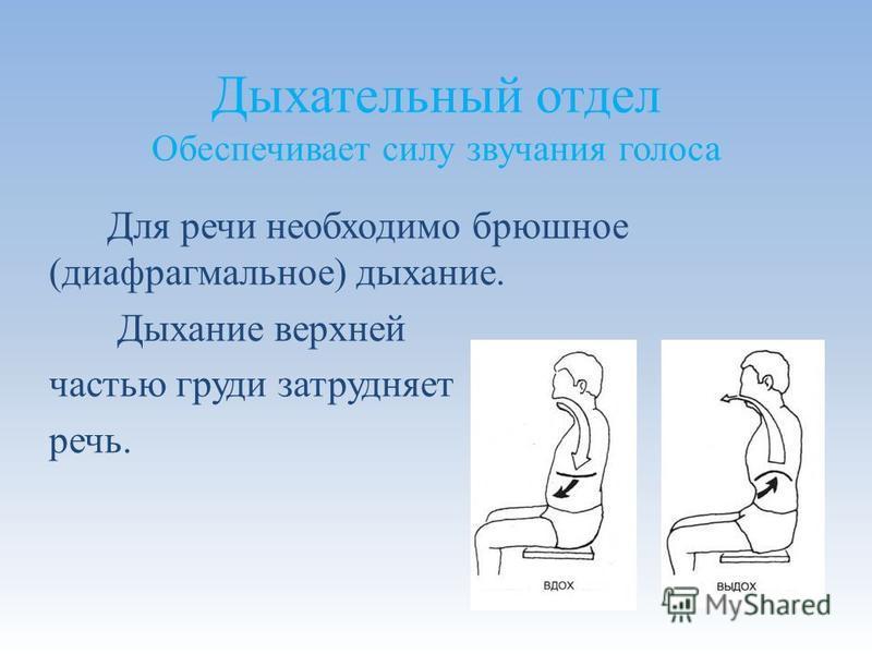 Дыхательный отдел Обеспечивает силу звучания голоса Для речи необходимо брюшное (диафрагмальное) дыхание. Дыхание верхней частью груди затрудняет речь.