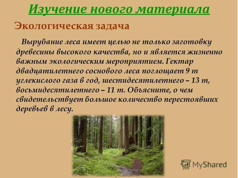 Изучение нового материала Экологическая задача Вырубание леса имеет целью не только заготовку древесины высокого качества, но и является жизненно важным экологическим мероприятием. Гектар двадцатилетнего соснового леса поглощает 9 т углекислого газа
