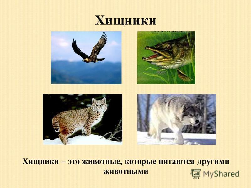 Хищники Хищники – это животные, которые питаются другими животными