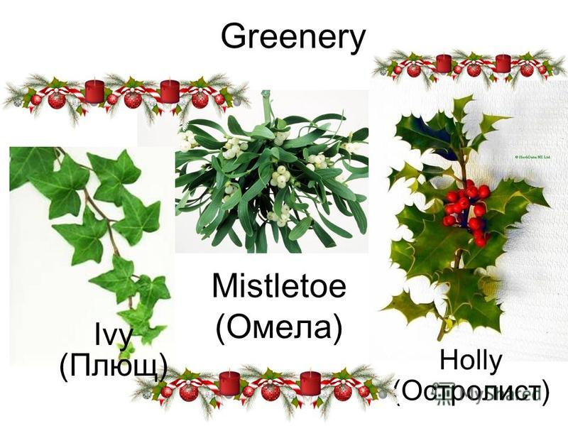 Greenery Holly (Остролист) Mistletoe (Омела) Ivy (Плющ)