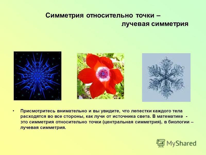 Симметрия относительно точки – лучевая симметрия Присмотритесь внимательно и вы увидите, что лепестки каждого тела расходятся во все стороны, как лучи от источника света. В математике - это симметрия относительно точки (центральная симметрия), в биол