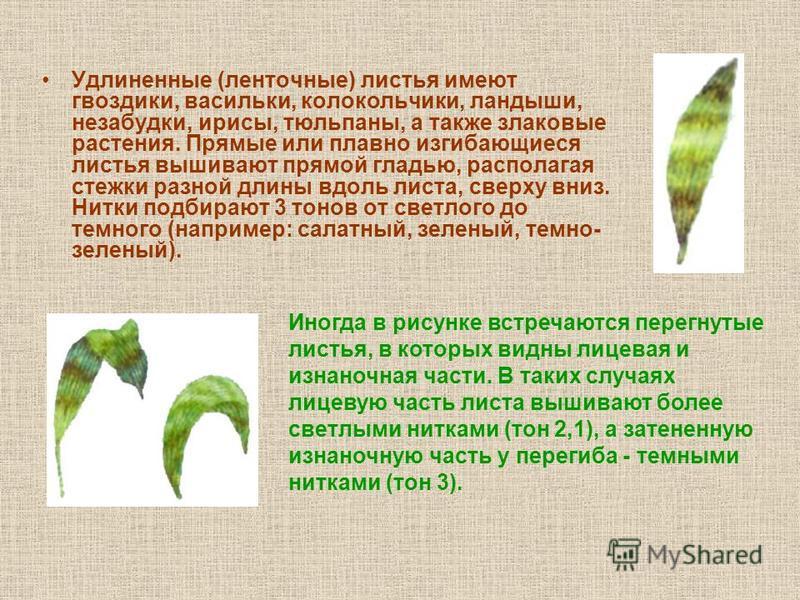 Форма листьев и техника их выполнения
