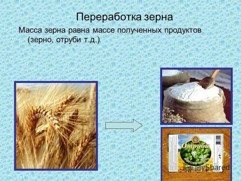 Переработка зерна Масса зерна равна массе полученных продуктов (зерно, отруби т.д.)