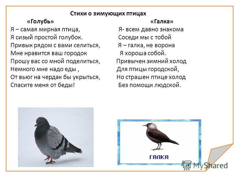 Стихи о зимующих птицах «Голубь» «Галка» Я – самая мирная птица, Я- всем давно знакома Я сизый простой голубок. Соседи мы с тобой Привык рядом с вами селиться, Я – галка, не ворона Мне нравится ваш городок Я хороша собой. Прошу вас со мной поделиться