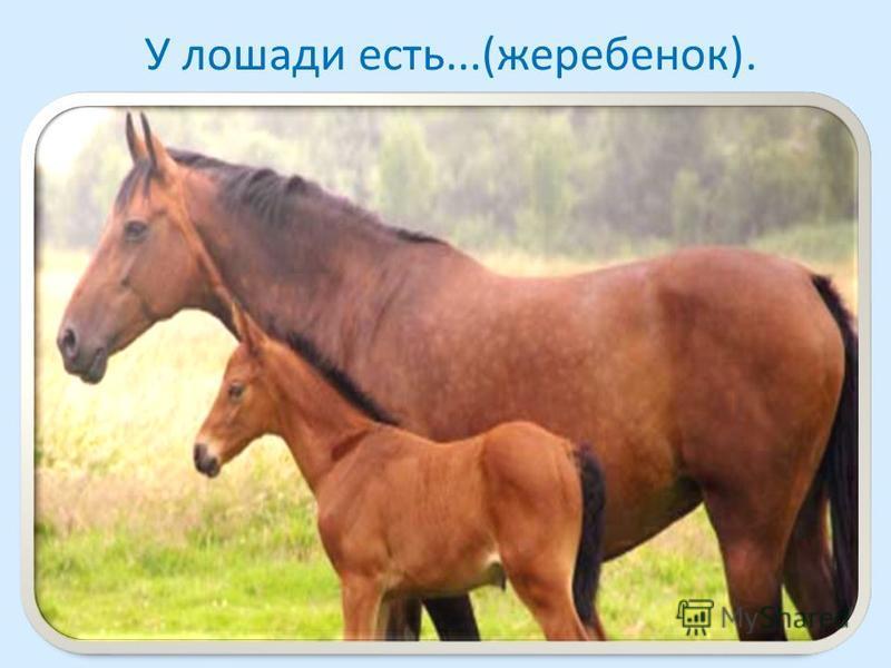 У лошади есть...(жеребенок).