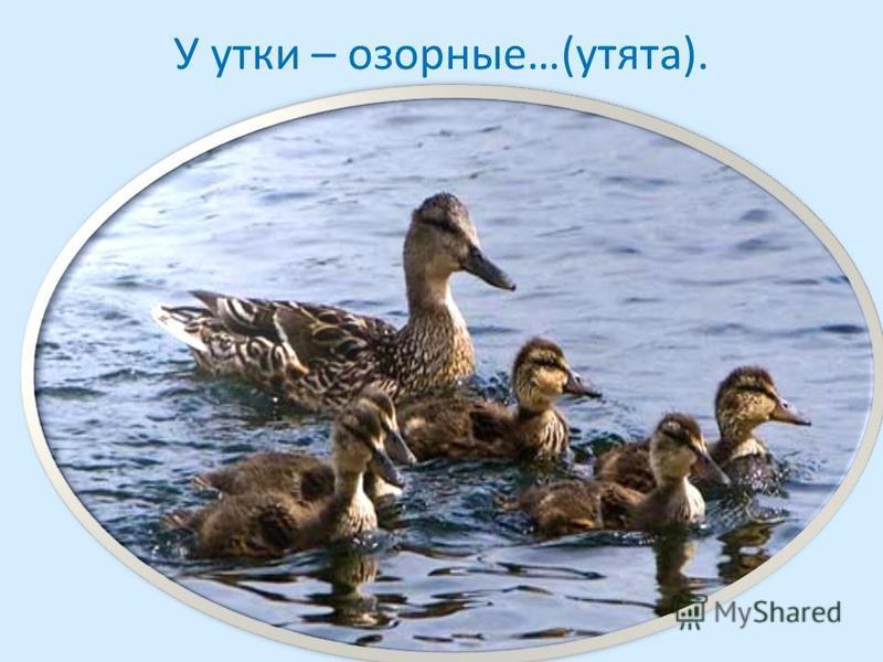 У утки – озорные…(утята).