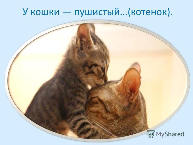 У кошки пушистый...(котенок).