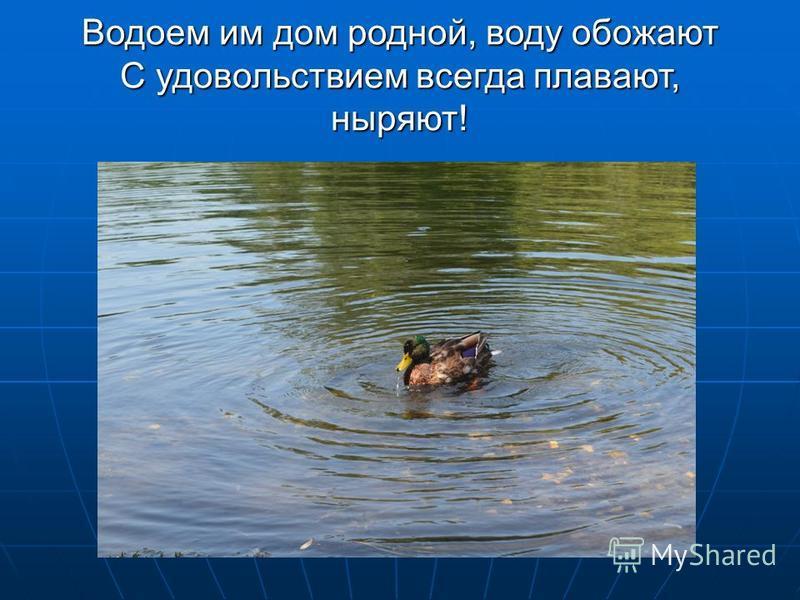 Водоем им дом родной, воду обожают С удовольствием всегда плавают, ныряют!