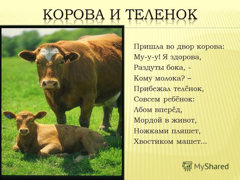 Пришла во двор корова: Му-у-у! Я здорова, Раздуты бока, - Кому молока? – Прибежал телёнок, Совсем ребёнок: Лбом вперёд, Мордой в живот, Hожками пляшет, Хвостиком машет...