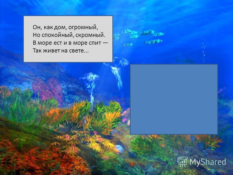 Он, как дом, огромный, Но спокойный, скромный. В море ест и в море спит Так живет на свете...