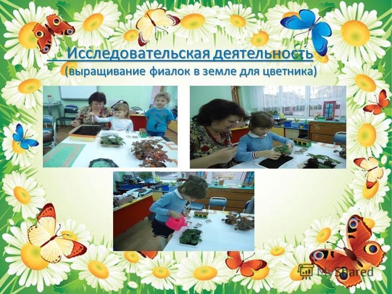 Исследовательская деятельность (выращивание фиалок в земле для цветника) (выращивание фиалок в земле для цветника)