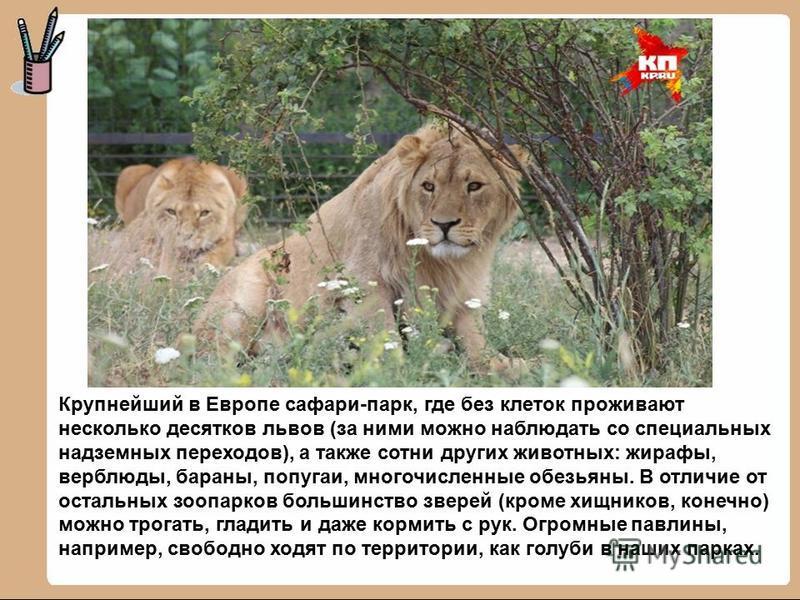 Крупнейший в Европе сафари-парк, где без клеток проживают несколько десятков львов (за ними можно наблюдать со специальных надземных переходов), а также сотни других животных: жирафы, верблюды, бараны, попугаи, многочисленные обезьяны. В отличие от о