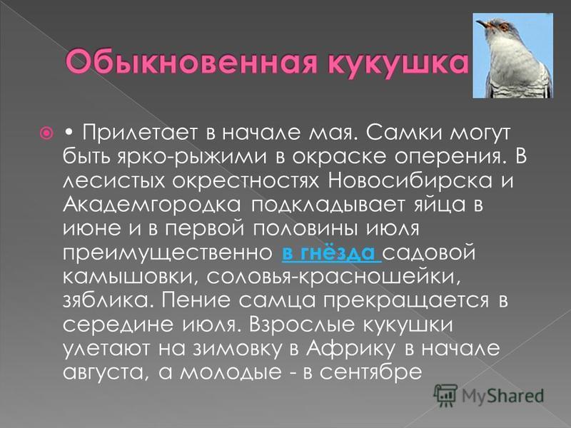 Прилетает в начале мая. Самки могут быть ярко-рыжими в окраске оперения. В лесистых окрестностях Новосибирска и Академгородка подкладывает яйца в июне и в первой половины июля преимущественно в гнёзда садовой камышовки, соловья-красношейки, зяблика.