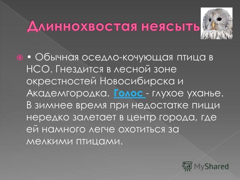 Обычная оседло-кочующая птица в НСО. Гнездится в лесной зоне окрестностей Новосибирска и Академгородка. Голос - глухое уханье. В зимнее время при недостатке пищи нередко залетает в центр города, где ей намного легче охотиться за мелкими птицами. Голо