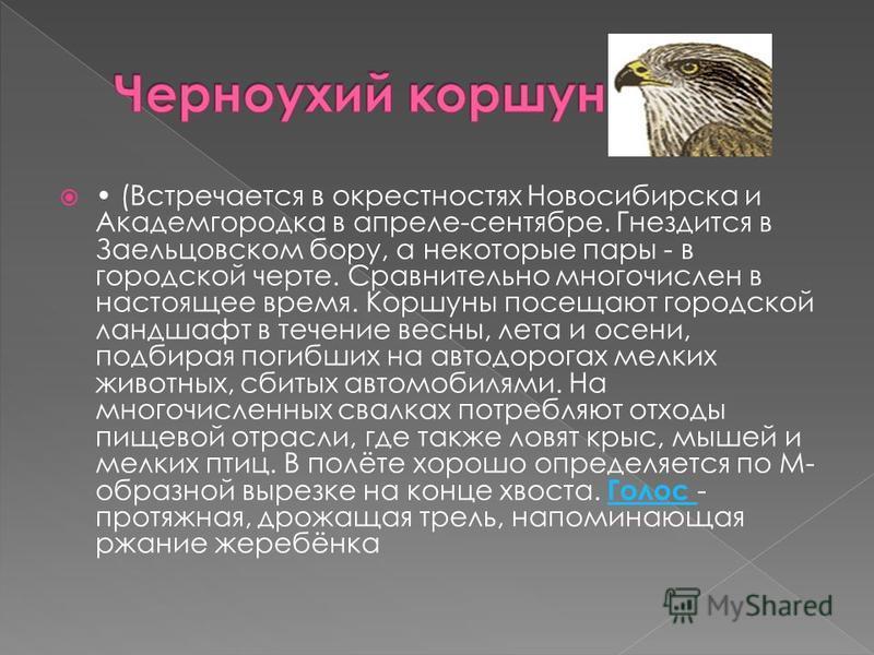 (Встречается в окрестностях Новосибирска и Академгородка в апреле-сентябре. Гнездится в Заельцовском бору, а некоторые пары - в городской черте. Сравнительно многочислен в настоящее время. Коршуны посещают городской ландшафт в течение весны, лета и о