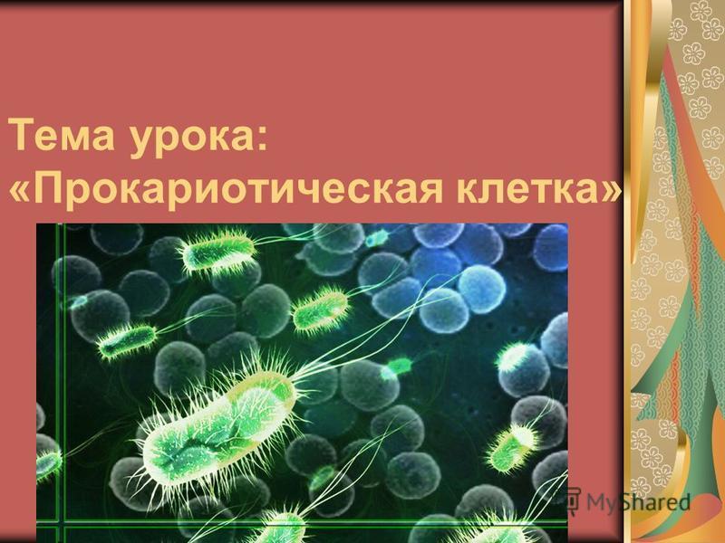Тема урока: «Прокариотическая клетка»
