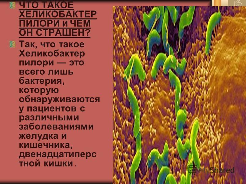 ЧТО ТАКОЕ ХЕЛИКОБАКТЕР ПИЛОРИ И ЧЕМ ОН СТРАШЕН? Так, что такое Хеликобактер пилори это всего лишь бактерия, которую обнаруживаются у пациентов с различными заболеваниями желудка и кишечника, двенадцатиперстной кишки.