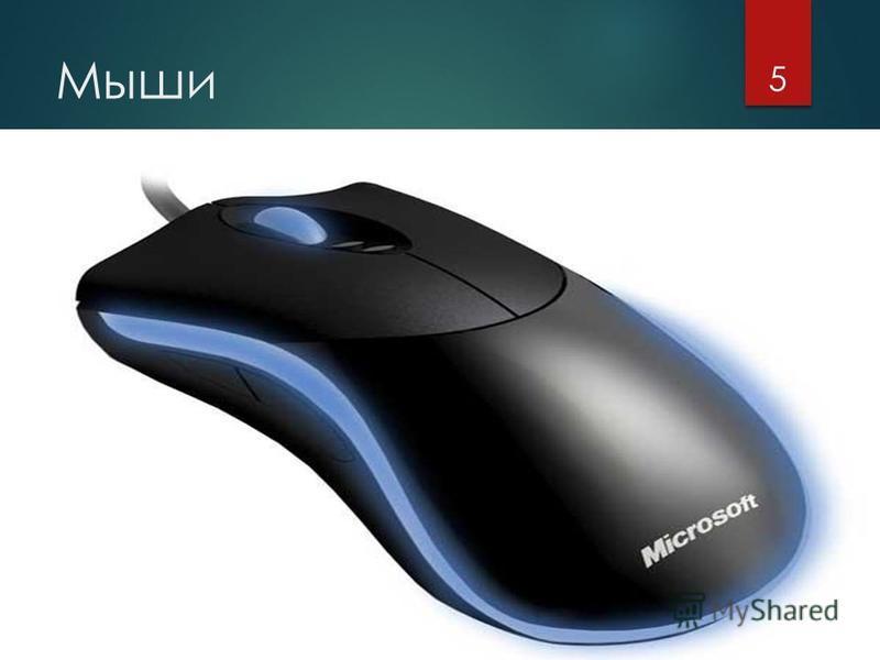 Мыши 5
