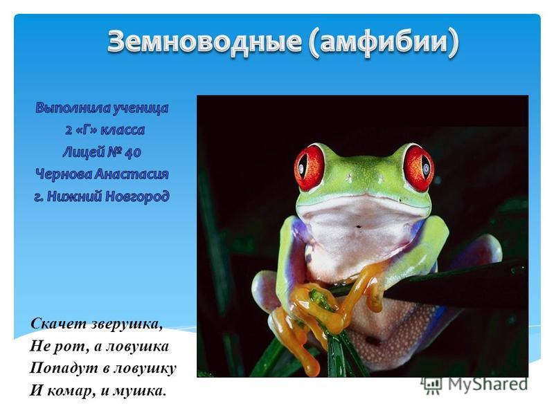 Скачет зверушка, Не рот, а ловушка Попадут в ловушку И комар, и мушка.