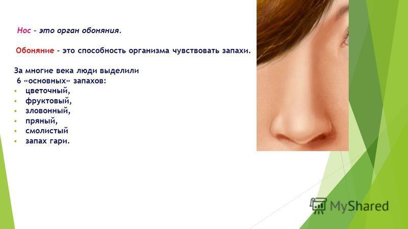 Нос – это орган обоняния. Обоняние – это способность организма чувствовать запахи. За многие века люди выделили 6 «основных» запахов: цветочный, фруктовый, зловонный, пряный, смолистый запах гари.