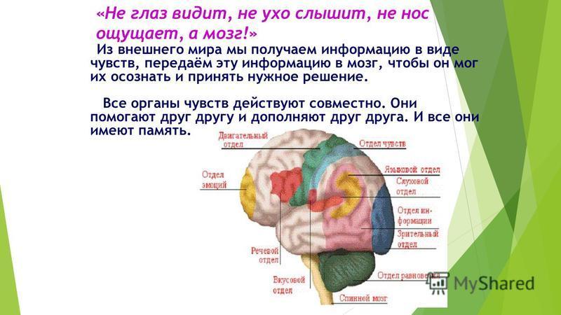 «Не глаз видит, не ухо слышит, не нос ощущает, а мозг!» Из внешнего мира мы получаем информацию в виде чувств, передаём эту информацию в мозг, чтобы он мог их осознать и принять нужное решение. Все органы чувств действуют совместно. Они помогают друг