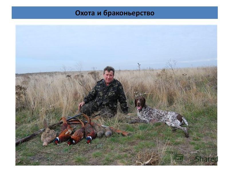 Охота и браконьерство