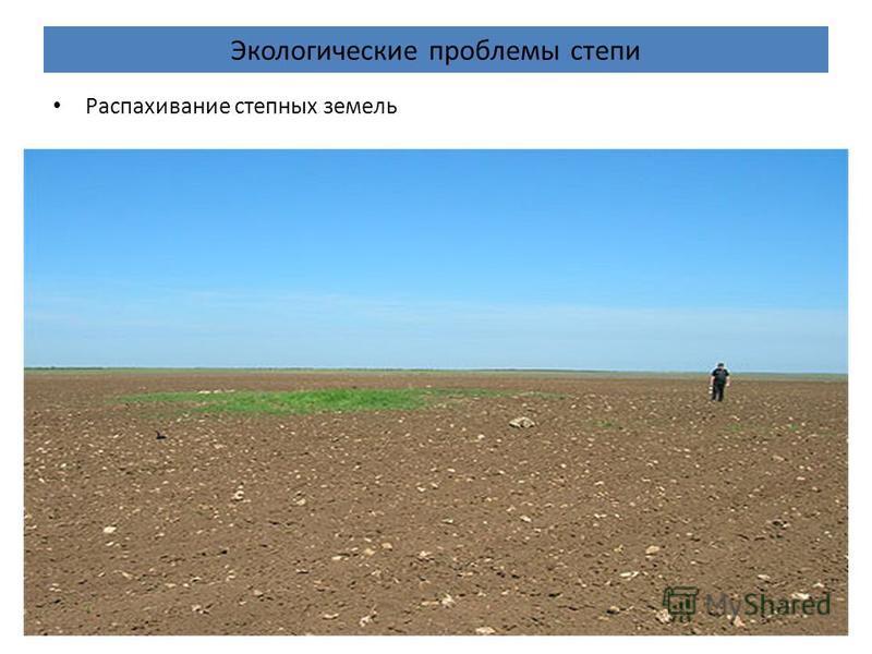 Экологические проблемы степи Распахивание степных земель