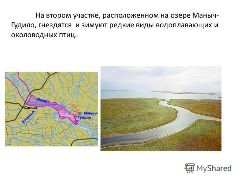 На втором участке, расположенном на озере Маныч- Гудило, гнездятся и зимуют редкие виды водоплавающих и околоводных птиц.