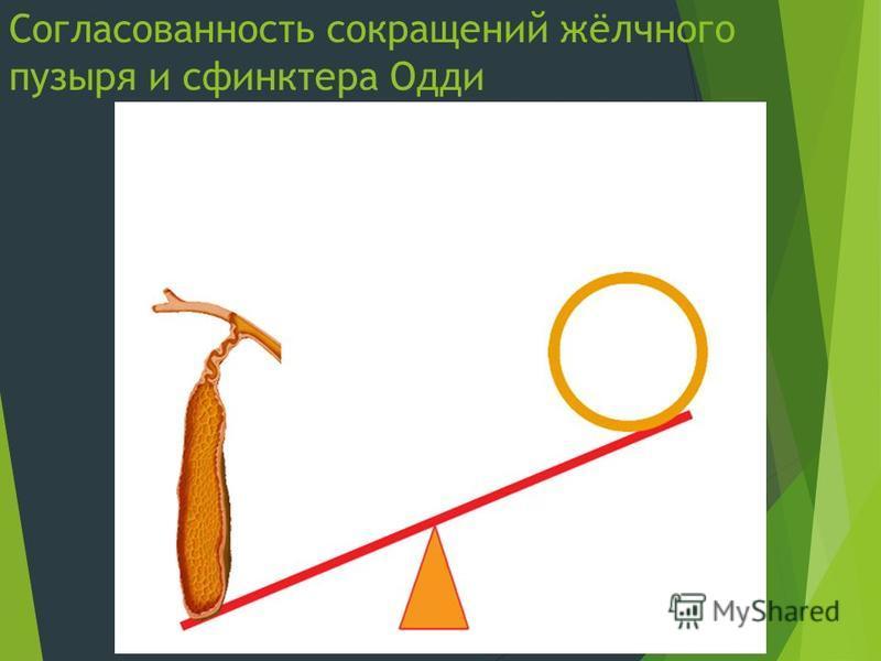 Согласованность сокращений жёлчного пузыря и сфинктера Одди