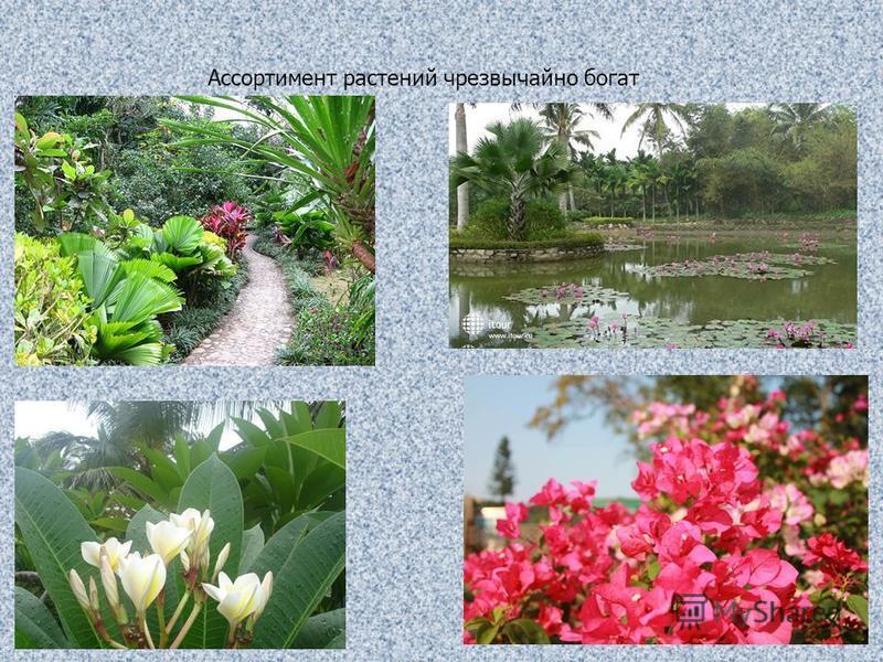Ассортимент растений чрезвычайно богат