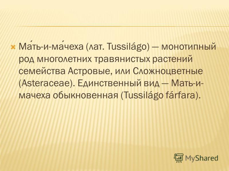 Мать-и-мачеха (лат. Tussilágo) монотипный род многолетних травянистых растений семейства Астровые, или Сложноцветные (Asteraceae). Единственный вид Мать-и- мачеха обыкновенная (Tussilágo fárfara).