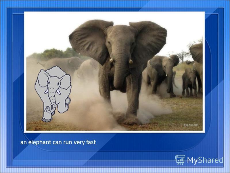 an elephant can run very fast