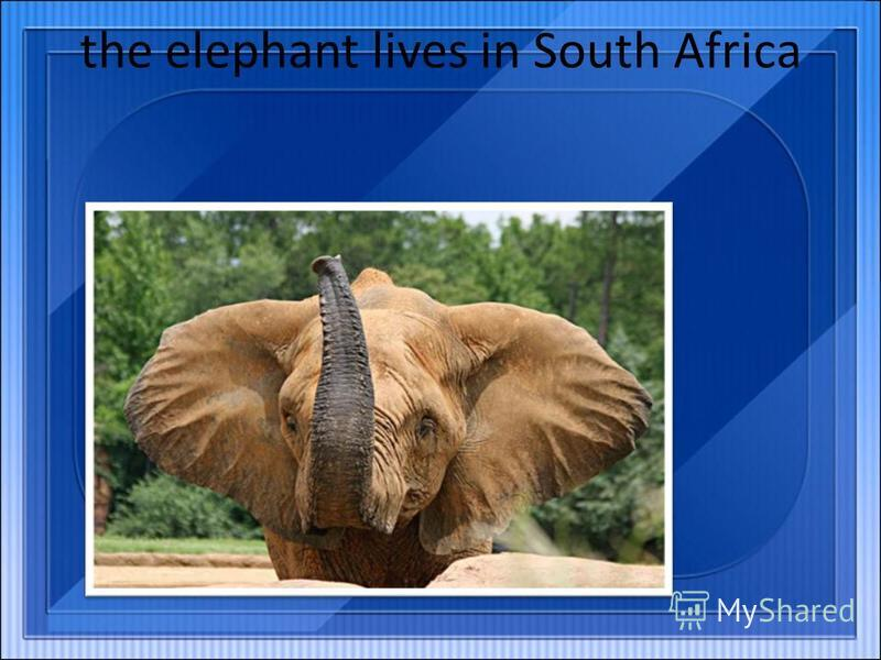 the elephant lives in South Africa