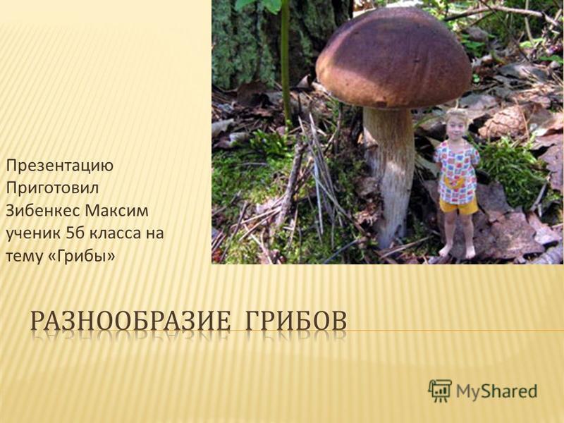 Презентацию Приготовил Зибенкес Максим ученик 5 б класса на тему « Грибы »