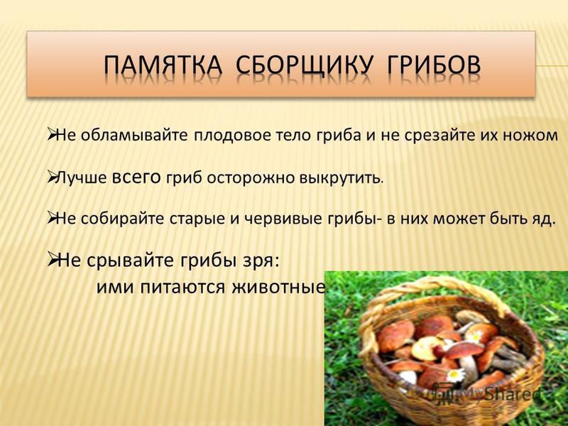 Не обламывайте плодовое тело гриба и не срезайте их ножом Лучше всего гриб осторожно выкрутить. Не собирайте старые и червивые грибы - в них может быть яд. Не срывайте грибы зря : ими питаются животные.