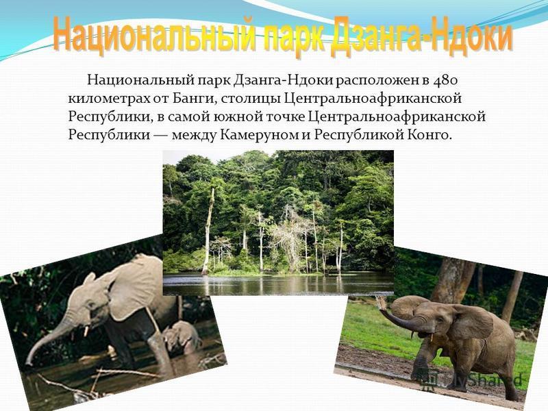Национальный парк Дзанга-Ндоки расположен в 480 километрах от Банги, столицы Центральноафриканской Республики, в самой южной точке Центральноафриканской Республики между Камеруном и Республикой Конго.
