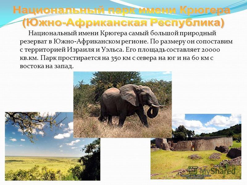 Национальный имени Крюгера самый большой природный резерват в Южно-Африканском регионе. По размеру он сопоставим с территорией Израиля и Уэльса. Его площадь составляет 20000 кв.км. Парк простирается на 350 км с севера на юг и на 60 км с востока на за