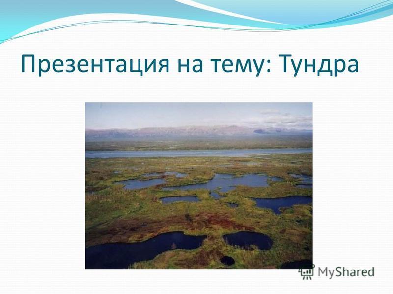 Презентация на тему: Тундра