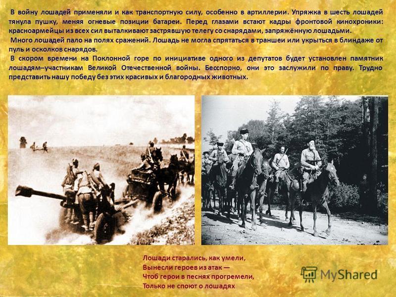 В войну лошадей применяли и как транспортную силу, особенно в артиллерии. Упряжка в шесть лошадей тянула пушку, меняя огневые позиции батареи. Перед глазами встают кадры фронтовой кинохроники: красноармейцы из всех сил выталкивают застрявшую телегу с