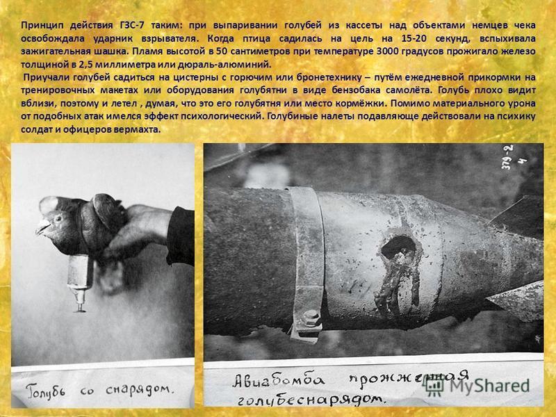 Принцип действия ГЗС-7 таким: при выпаривании голубей из кассеты над объектами немцев чека освобождала ударник взрывателя. Когда птица садилась на цель на 15-20 секунд, вспыхивала зажигательная шашка. Пламя высотой в 50 сантиметров при температуре 30