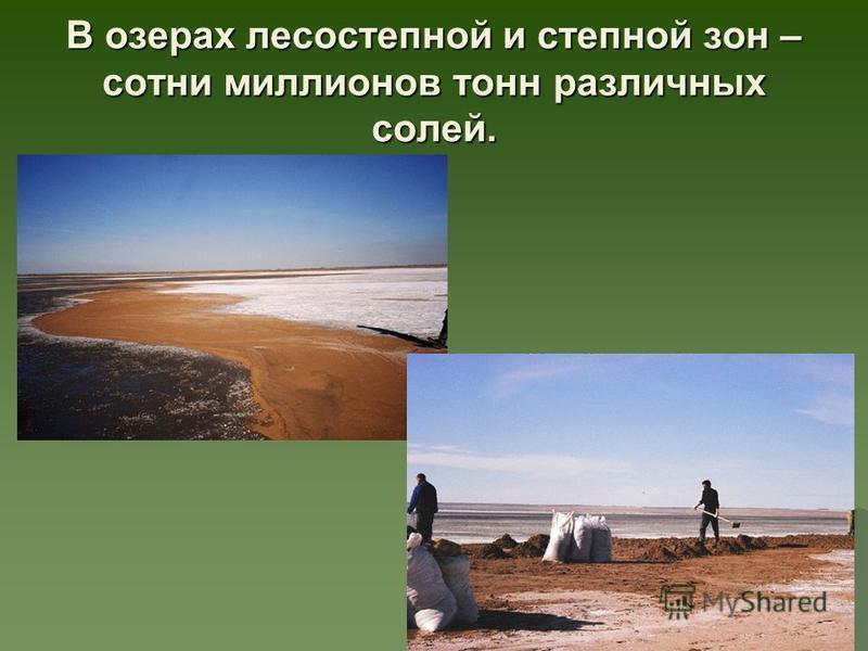В озерах лесостепной и степной зон – сотни миллионов тонн различных солей.