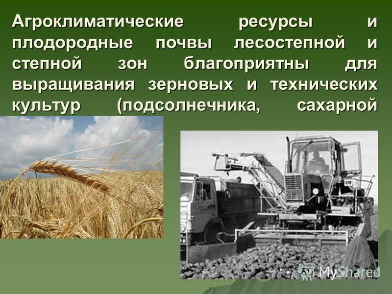 Агроклиматические ресурсы и плодородные почвы лесостепной и степной зон благоприятны для выращивания зерновых и технических культур (подсолнечника, сахарной свеклы)