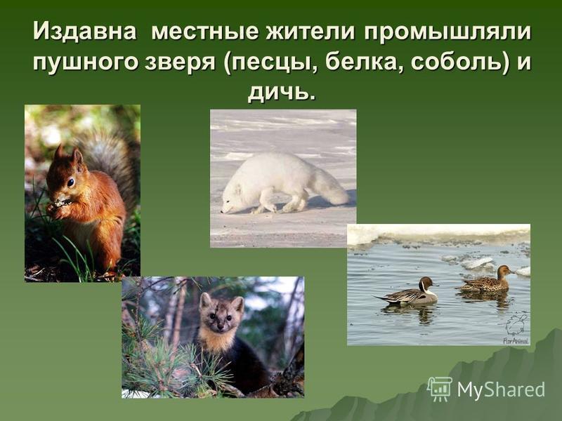 Издавна местные жители промышляли пушного зверя (песцы, белка, соболь) и дичь.