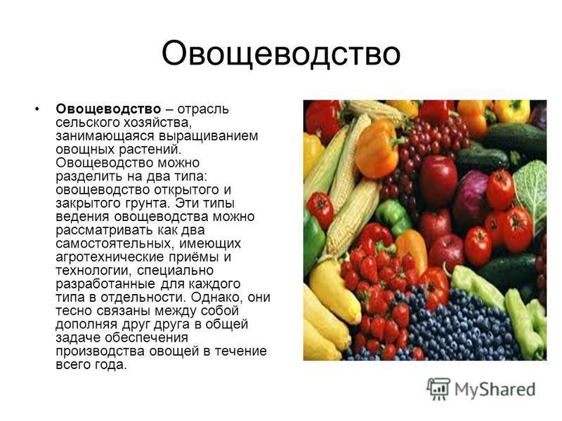 Овощеводство Овощеводство – отрасль сельского хозяйства, занимающаяся выращиванием овощных растений. Овощеводство можно разделить на два типа: овощеводство открытого и закрытого грунта. Эти типы ведения овощеводства можно рассматривать как два самост
