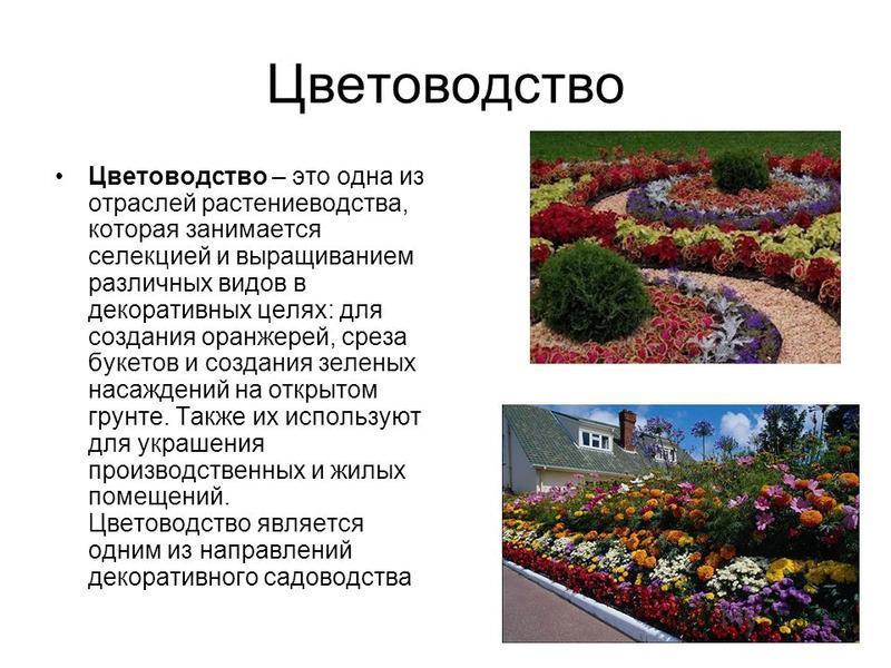 Цветоводство Цветоводство – это одна из отраслей растениеводства, которая занимается селекцией и выращиванием различных видов в декоративных целях: для создания оранжерей, среза букетов и создания зеленых насаждений на открытом грунте. Также их испол