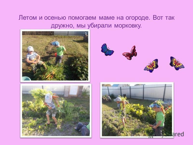 Летом и осенью помогаем маме на огороде. Вот так дружно, мы убирали морковку..