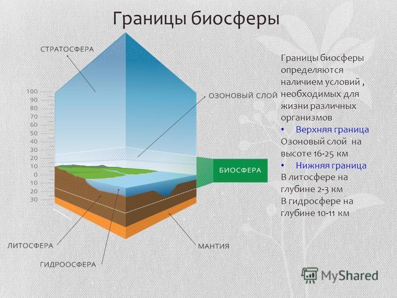 Границы биосферы определяются наличием условий, необходимых для жизни различных организмов Верхняя граница Озоновый слой на высоте 16-25 км Нижняя граница В литосфере на глубине 2-3 км В гидросфере на глубине 10-11 км Границы биосферы