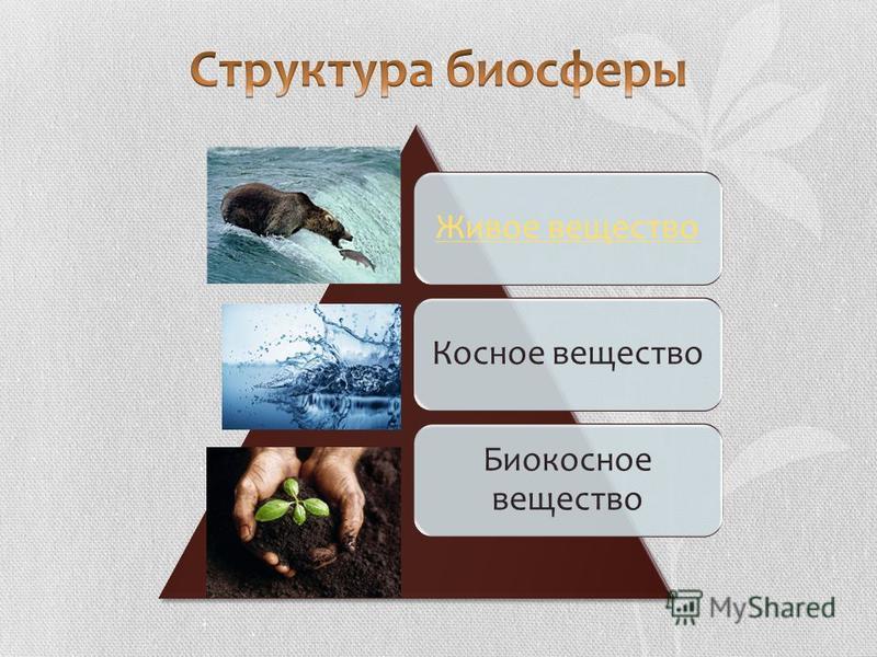 Живое вещество Косное вещество Биокосное вещество