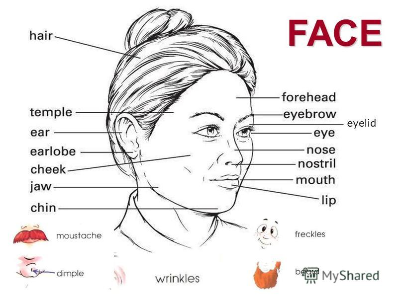FACE eyelid